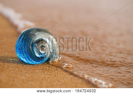 glass tropical sea  shell with waves under sunrise sun light