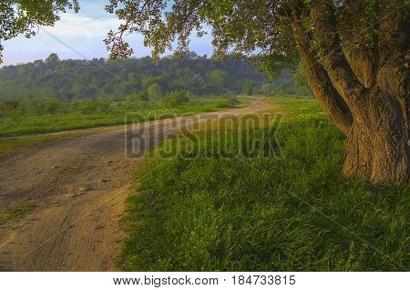 Field road leading to wooded hills, and near the road, on grass, is an old large tree. The bark of which is covered by furrows is very similar to the wrinkles of the person.