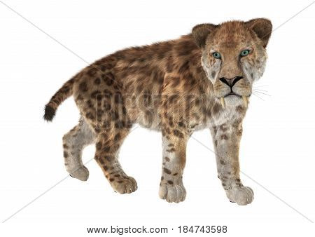 3D Rendering Saber Tooth Tiger On White