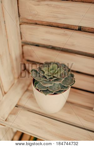 In a wooden box there is a green stone rose in a pot
