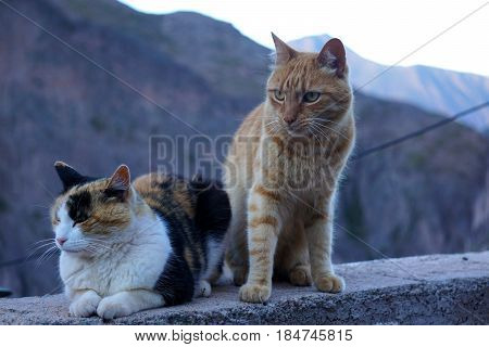 Two cats sitting on a ledge in front of a mountain at dusk
