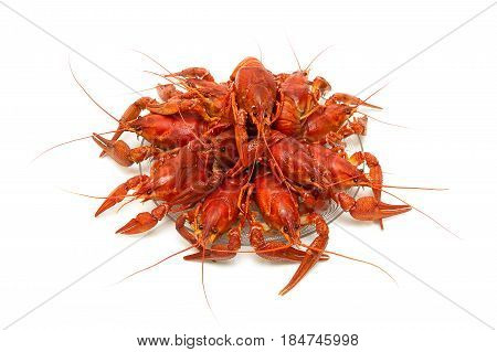 Boiled river crayfish on a plate on a white background. Horizontal photo.