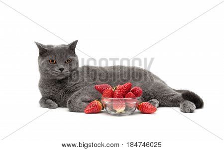 Gray cat and ripe strawberries on a white background. Horizontal photo.