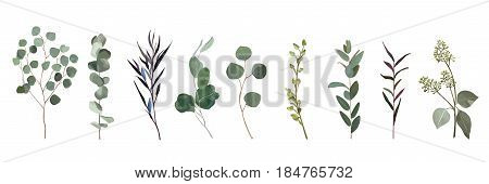 Eucalyptus agonis seeded designer art different foliage natural branches leaves tropical elements in watercolor style set collection. Vector decorative beautiful cute elegant illustration for design