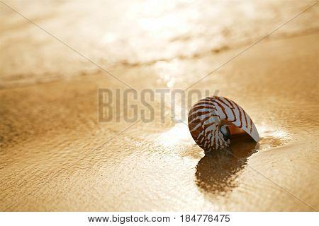 seashell nautilus on sea beach under sunset sun light, Canary island, Spain