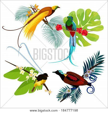 Colorful birds of paradise various sizes sitting on branches with flowers poster on white vector of flying heaven beauties