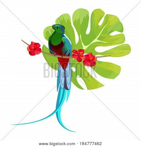 Ribbon-tailed astrapia in blue color sitting on branch with red flowers and huge greenish leaf on background vector illustration