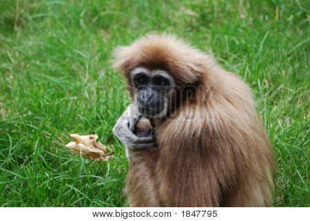A monkey sitting on a field of a green grass. poster