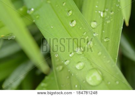 Natural green background, leaves, water drops, nature