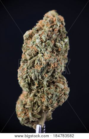 Detail of dried cannabis bud (white widow strain) isolated over black background