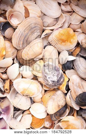 Colorfool seashells background. texture of colored seashells.