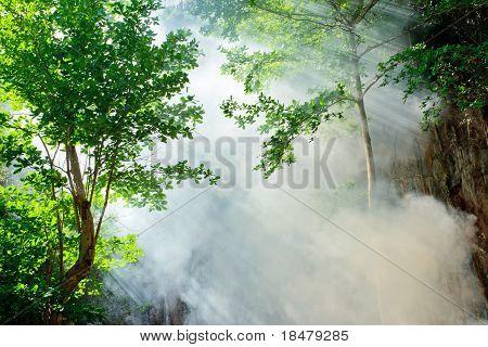 Sunbeam In Fairy Forest