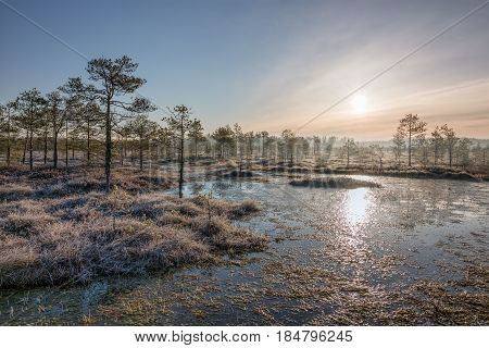 Sunrise in the cold and frosty spring bog