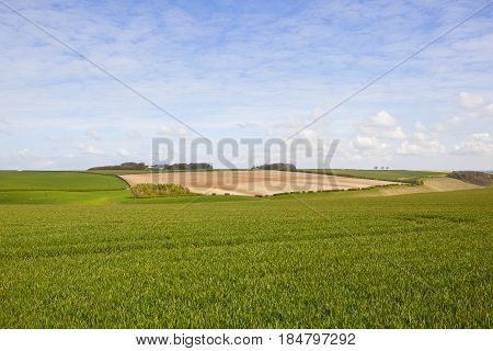 Chalky Soil And Wheat Fields