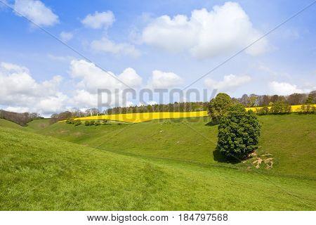 Springtime Meadows