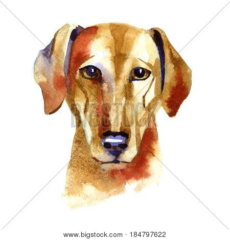 Azawak . Hound. Watercolor hand drawn illustration on white background.