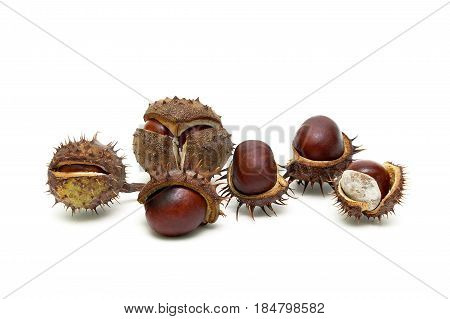 Ripe chestnut fruit isolated on white background. Horizontal photo.