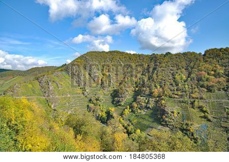 Vineyard in Ahr Valley near Bad Neuenahr-Ahrweiler,Rhineland-Palatinate,Germany