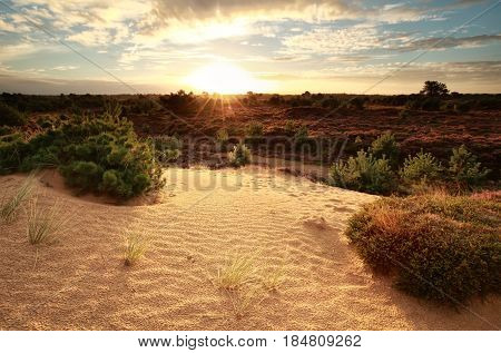 gold sunrise over sand dune and heather flowers