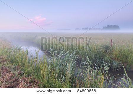 serene morning over summer farmland in Netherlands