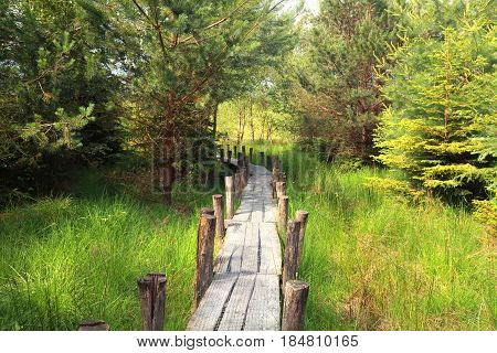 wooden path in the green forest, Drenthe