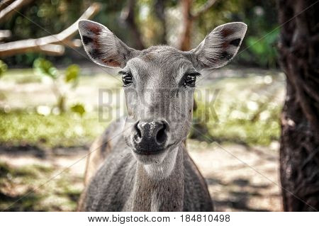 Young deer with big beautiful eyes in the glade in the forest came close looking into the camera lens.