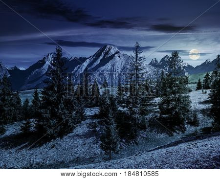 Composite summer landscape with spruce forest on grassy hillside in High Tatra Mountains at night in full moon light