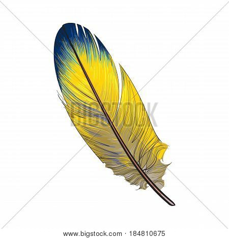 Hand drawn smoth, yellow and blue tropical, exotic bird feather, sketch style vector illustration on white background. Realistic hand drawing of yellow parrot, bird feather