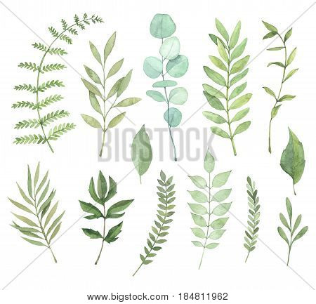 Hand drawn watercolor illustrations. Botanical clipart. Set of Green leaves herbs and branches. Floral Design elements. Perfect for wedding invitations greeting cards blogs posters and more