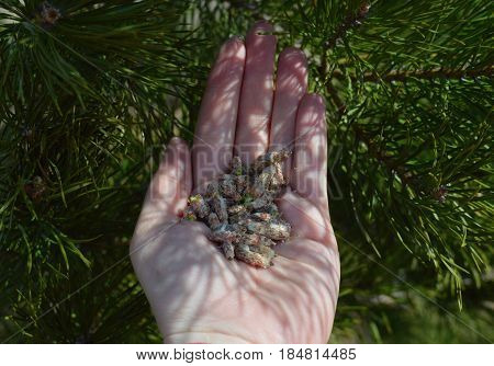 plant hand berry agriculture kidney forest pine fresh seedling green closeup spring holding grass environment planting seedling growth food tree hands gardening garden nature