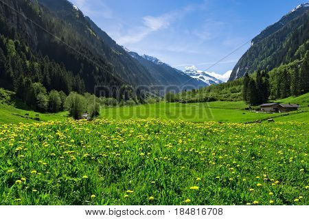 Austrian landscape with meadows and mountains in the springtime. Austria Tirol Zillertal Stillup valley.