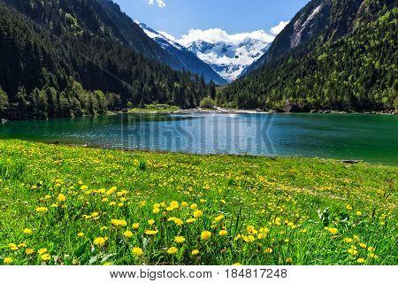 Mountain lake with bright yellow flowers in foreground. Stillup lake Austria Tirol