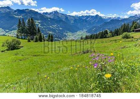 Alpine mountain view with bright green meadow in the foreground. Austria Tirol Zillertal Zillertal High Alpine Road