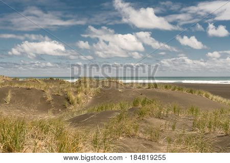 Auckland New Zealand - March 2 2017: Dark sand dunes with beachgrass marram under blue sky with white clouds at Karakare Beach. Tasman Sea and surf separates two halves.