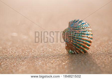 golden tropical shell on sea beach with waves under sunrise sun light, Canary island, Spain