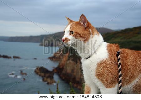 The cat travels in Wales and enjoys the scenery