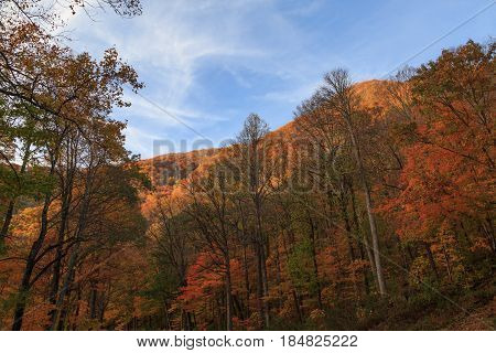 Great smokey mountains in fall season among trees
