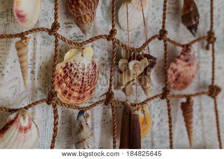 Variety seashells hanging on the wall macro