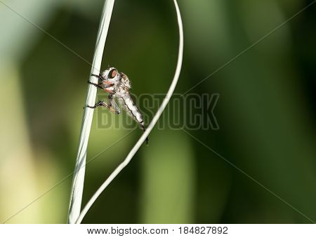 small bug in nature. close . A photo