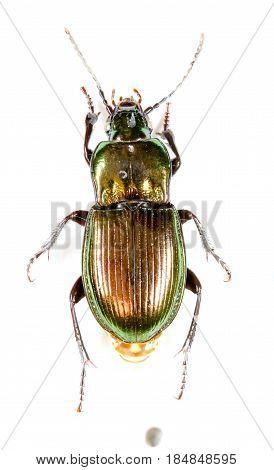Bug Isolated Closeup