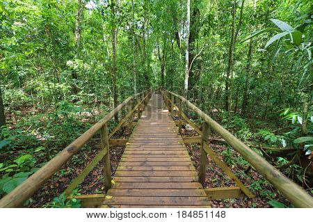 Boardwalk in forest Manuel Antonio Costa Rica
