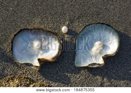 Pink pearls and oysters on the sand of the beach.