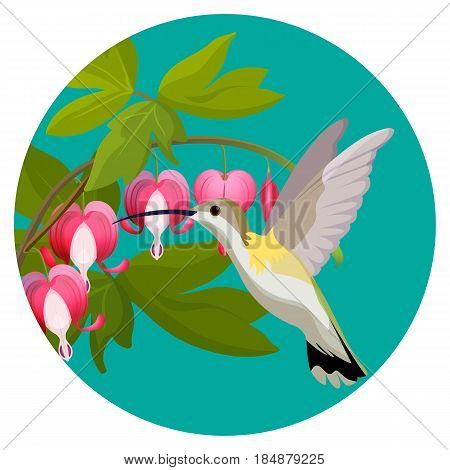 Bleeding heart flowers and hummingbird isolated realistic vector illustration in blue web button. Beautiful pink flowers and bird