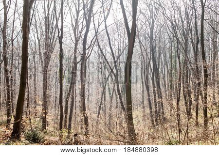 Forest Tree Nature