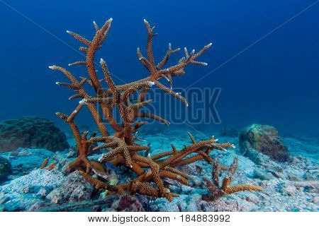 Hard Coral On The Sand