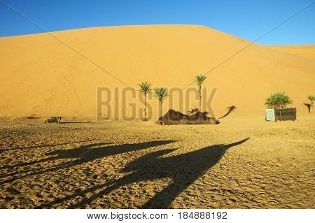 Shadow of camel on desert sand