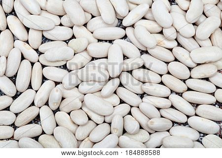 raw haricot bean. White beans grain background