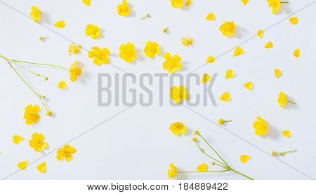 the yellow buttercups frame on white background