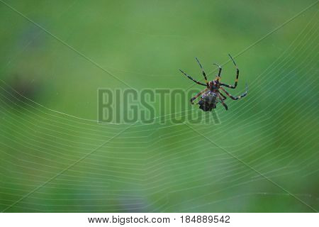 Close up of spider on a spider web