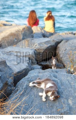 Two girls and two cats resting on the rocky shore of the Bosphorus Istanbul Turkey